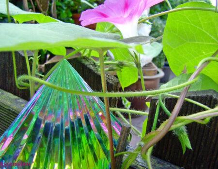 11-Grüne-Pyrmaide-Blumen
